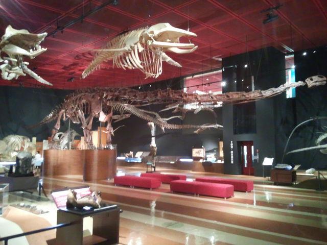 恐竜の展示の仕方にも工夫がこらされています。_いわき市石炭・化石館
