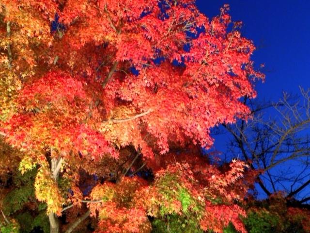 ライトアップされた紅葉は一見の価値あり_筑波山