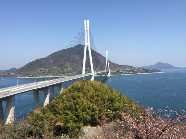 桜と多々羅大橋_瀬戸内しまなみ海道