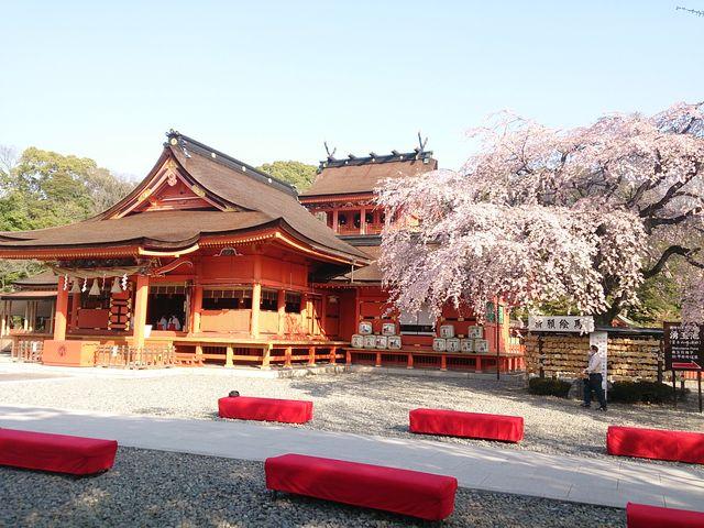 垂れ桜の向こうに本殿が_富士山本宮浅間大社