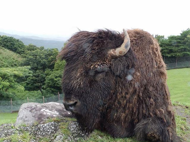 迫力満点_九州自然動物公園アフリカンサファリ