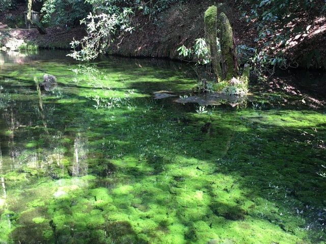美しい緑色_池山水源