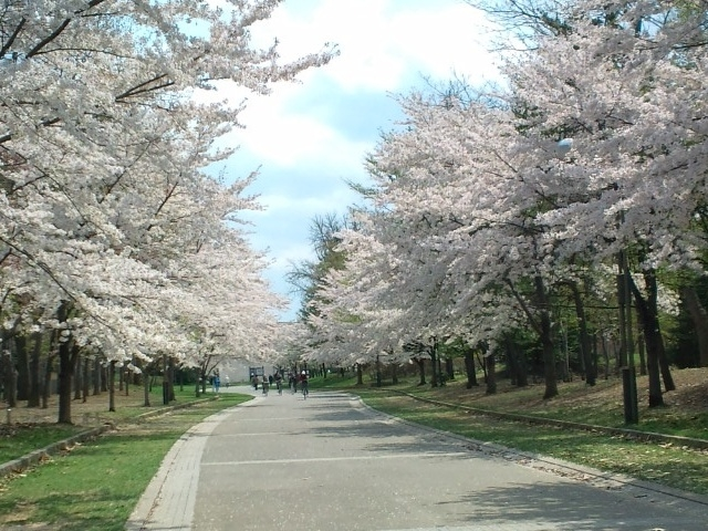 中島公園(桜)_中島公園