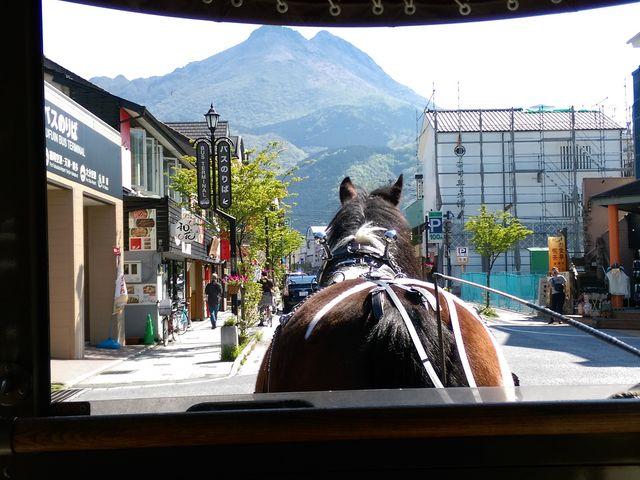 座るなら一番前の席がおすすめ。馬のおしりがプリプリで超可愛い。_観光辻馬車