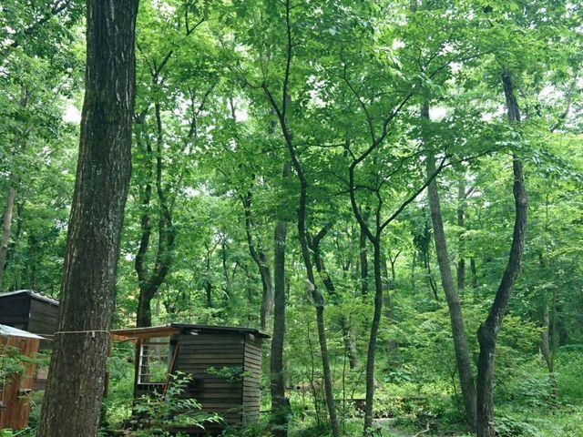 森林_小さな緑のインテリア 苔屋