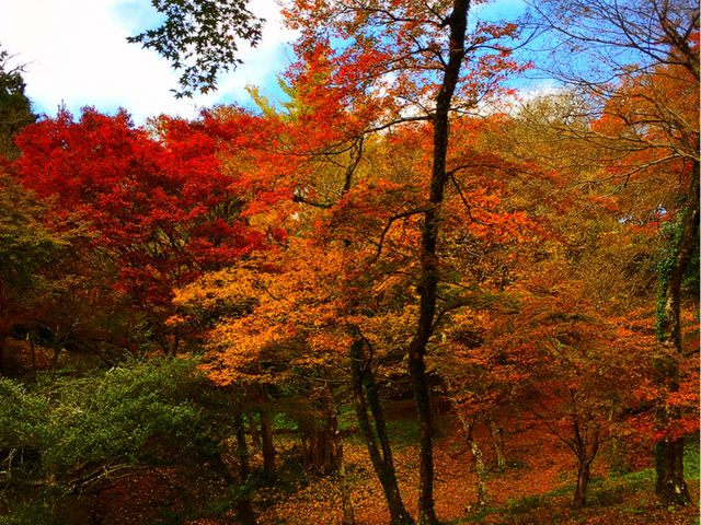 赤とオレンジに青い空が綺麗です。_用作公園