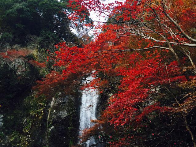 明治の森箕面国定公園(箕面の滝)
