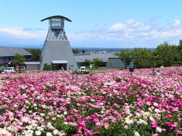 【愛宕山公園】アクセス・営業時間・料金情報 - じゃらんnet