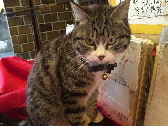 看板猫_宝当神社