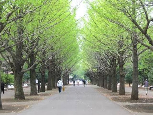 緑が豊富_光が丘公園