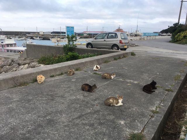 のんびりした島の雰囲気に癒されます_奥武島