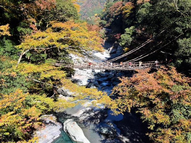 かずら橋_祖谷のかずら橋