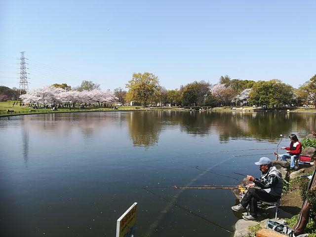 公園内の池_大仙公園