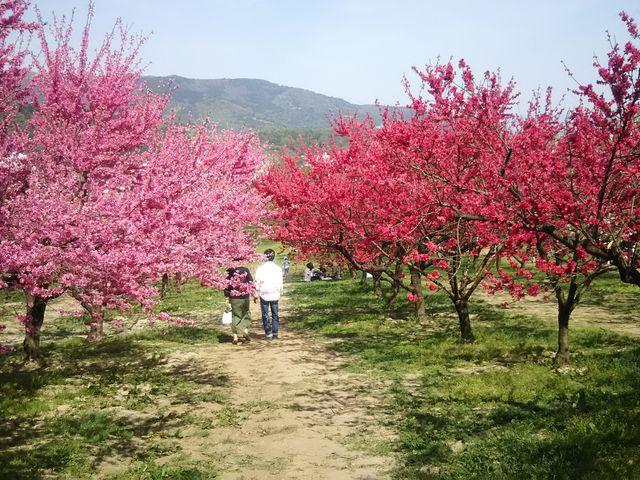 花もも回廊_飯坂温泉花ももの里