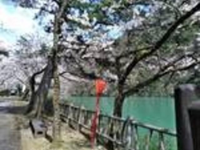 桜_庄川水記念公園
