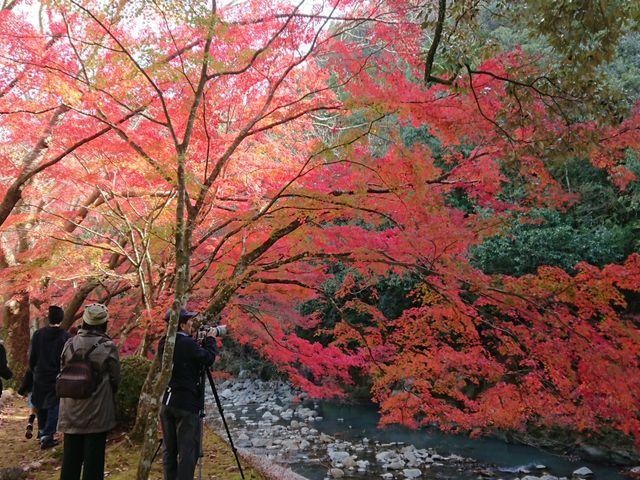 小春日和にて紅葉も美しく、家族連れや往年のカップルが次々と訪れていました。_青井岳荘 青井岳温泉