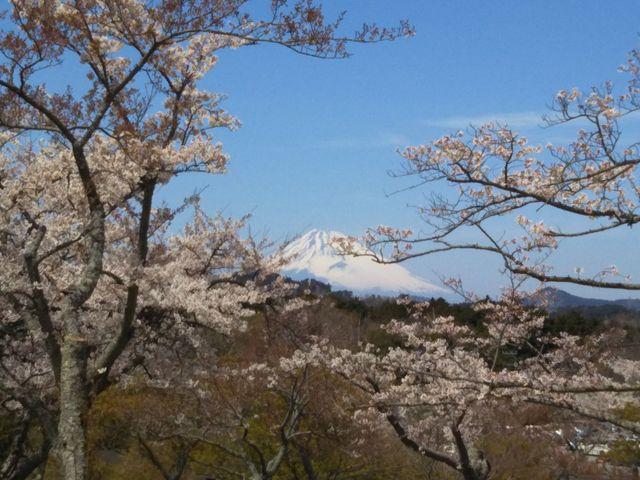 富士山がハッキリ見えて感激でした♪_大室山