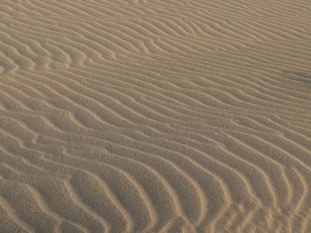鳥取砂丘では草地が増えているそうです。_風紋・砂簾