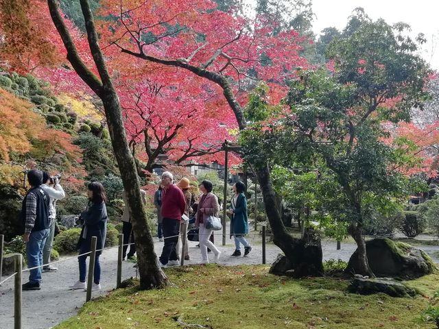 大変美しい庭園です_金剛輪寺庭園(明寿院)