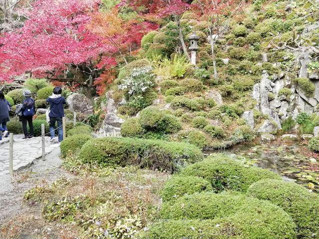 植栽と石組の配置が見事です_金剛輪寺庭園(明寿院)