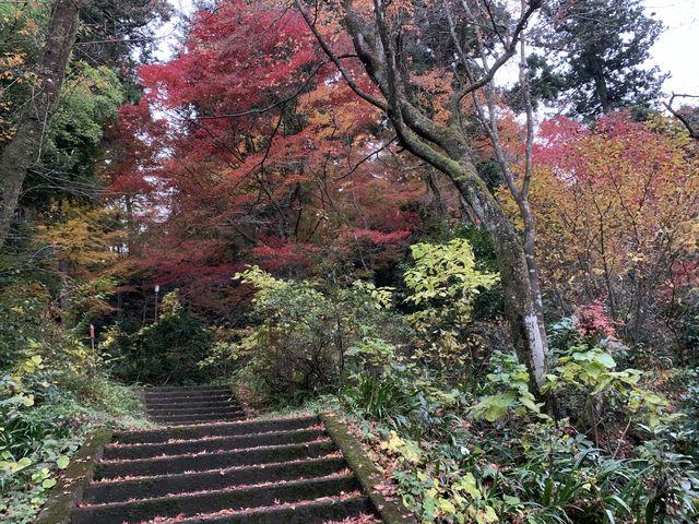 諏訪神社石段_加茂山公園の紅葉