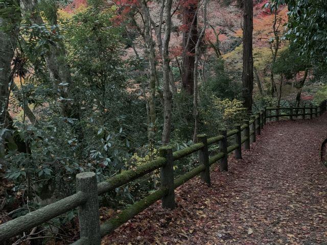 紅葉谷 _加茂山公園の紅葉
