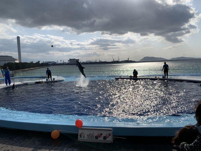イルカとトレーナー。ちょうどイルカがボールを加える直前_四国水族館