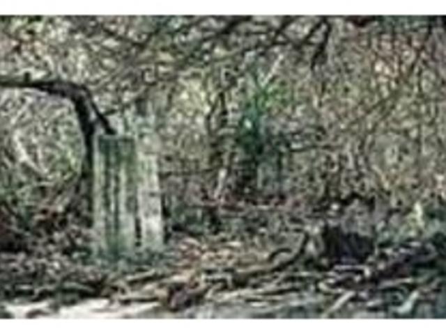 シタン林の中を分け入ると碑石が見られる_浜シタン群落