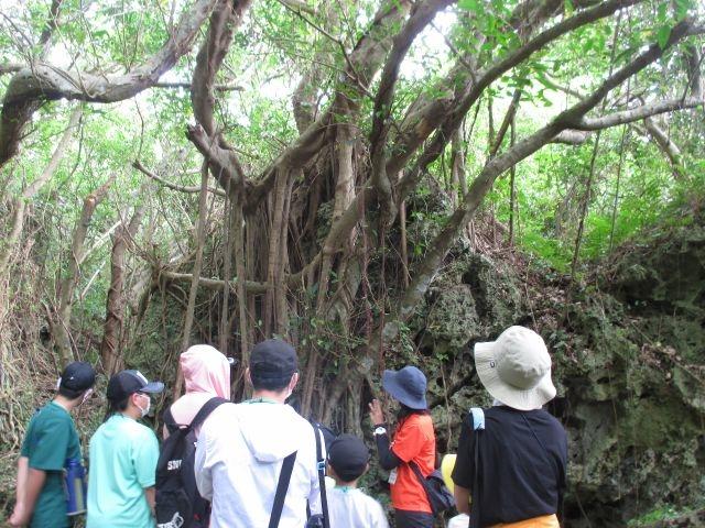 南国ジャングルで沖縄の大自然に触れる。_自然体験学校 沖縄校