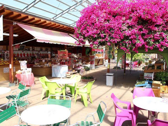 220坪ある当園自慢の売店&休憩所_磯山観光いちご園