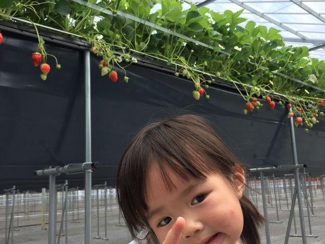 ITシステムを使って環境を整えて育てられたいちごは、子どもでも安心して食べられます。_FarmersConcierge