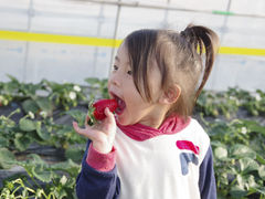 MASHIKO STRAWBERRY FARMの写真1