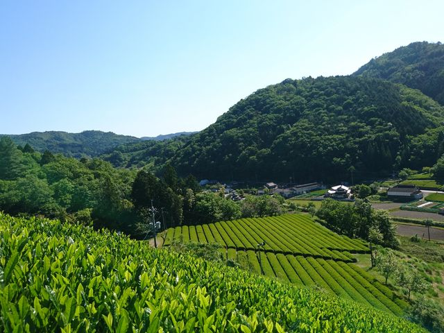 海田園黒坂製茶