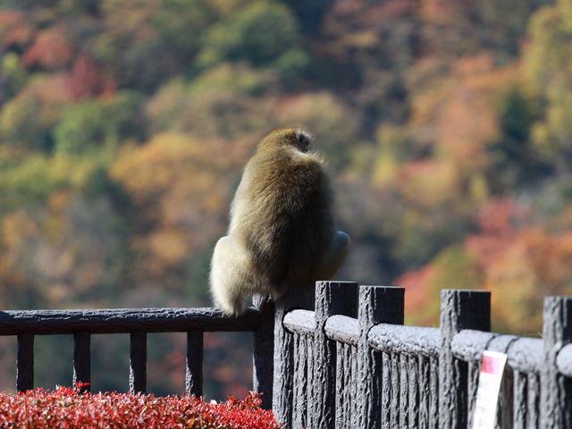 マッタリとお猿さん_四万川ダム
