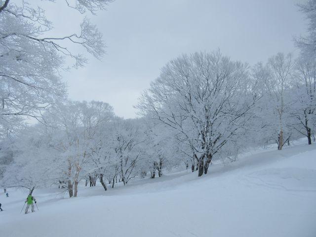 樹氷(霧氷)の中を滑ります。_野沢温泉スキー場