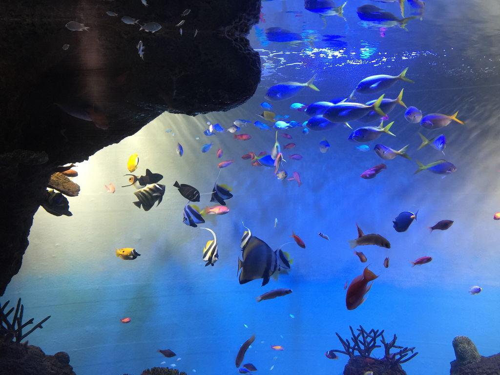 宮島水族館「みやじマリン」