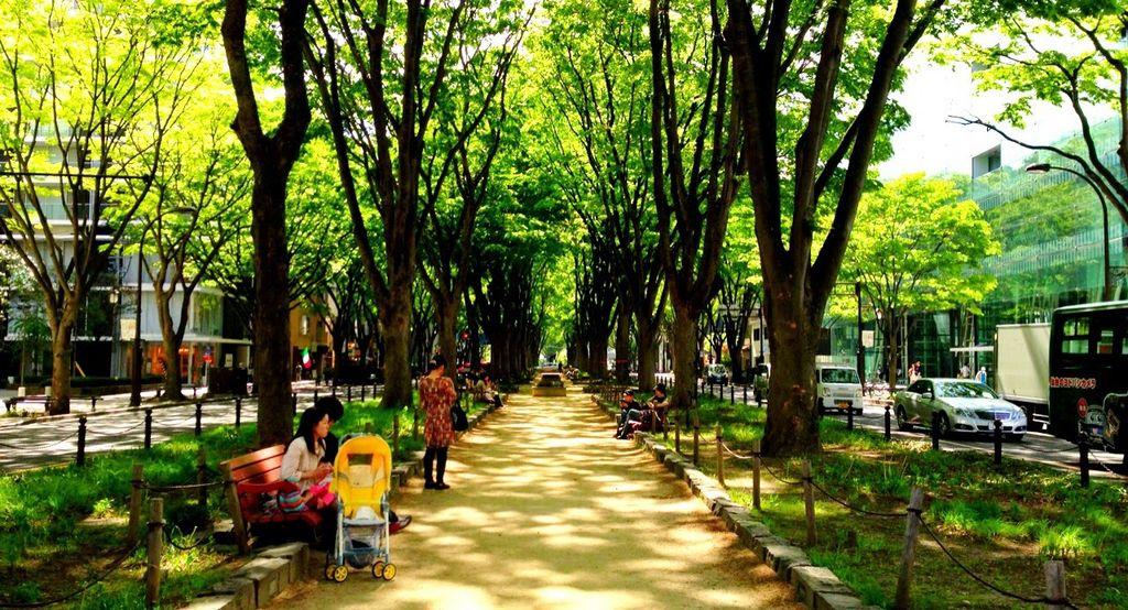 青葉通り・定禅寺通りのケヤキ並木