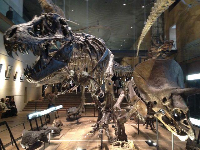 大きいです!_北九州市立いのちのたび博物館