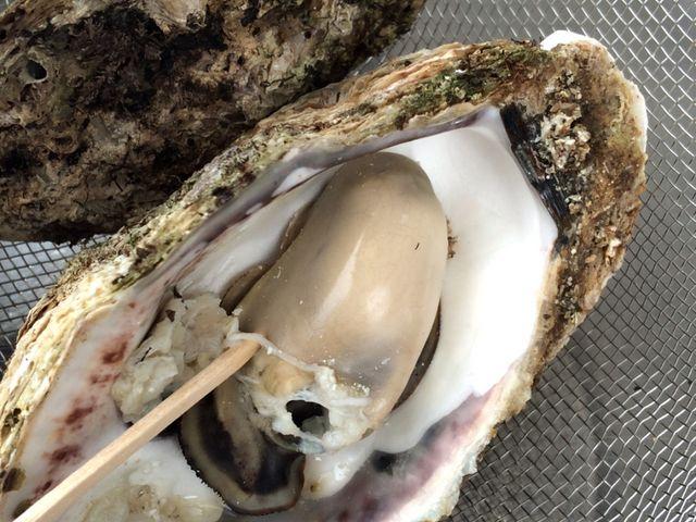 焼き牡蠣をいただきました。この日は1つ400円でした。大変美味しくいただきました。_にぎわい市場 ピアBandai