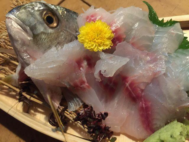 シロダイのお造り。これも素晴らしい!身の締まりとか。夏の魚とは思えません_囲炉茶屋