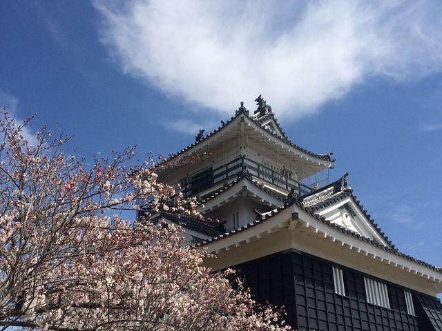 お城と桜_浜松城