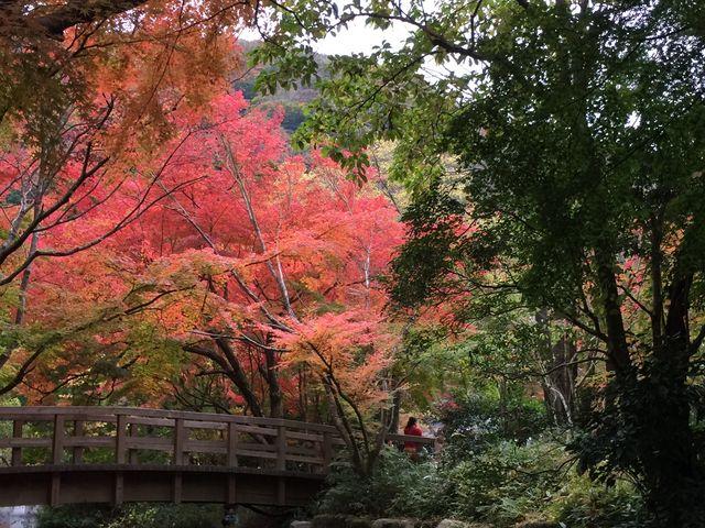 金鱗湖周辺は紅葉MAXです_由布院温泉