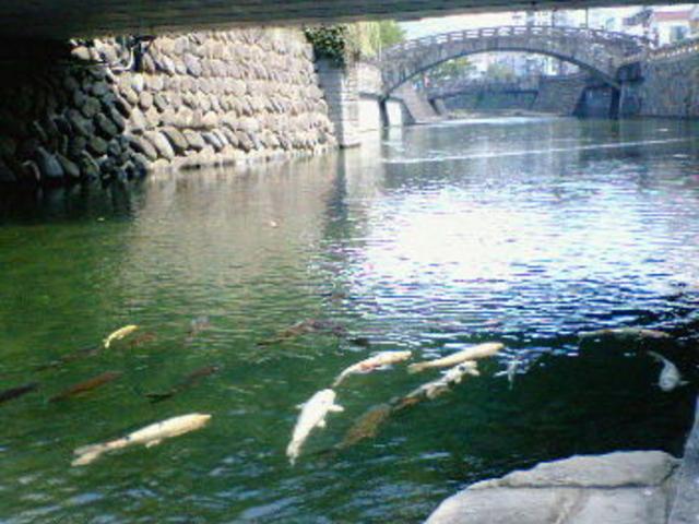 橋の下には鯉が集まる場所もあり、風情があります。_中島川の石橋群