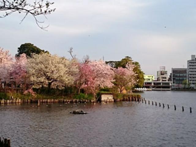 洗足池公園の桜】アクセス・営業...