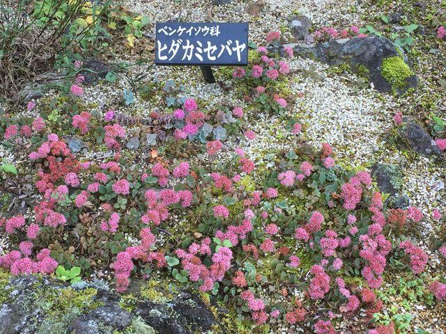 萩以外にも色々な秋の花が咲いていました。_仙台市野草園