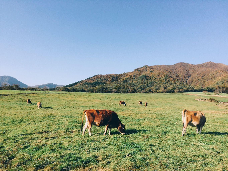 蒜山酪農農協ひるぜんジャージーランド
