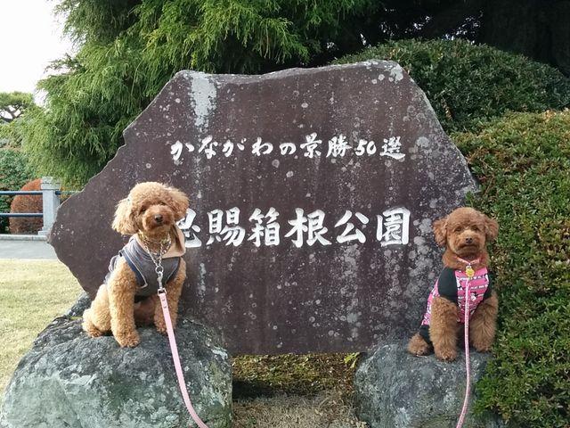 ツツジが咲いたらまたキレイだろうな_恩賜箱根公園