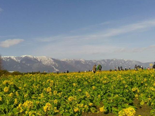 比良山と菜の花_なぎさ公園