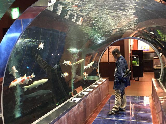 鯉のトンネル_道の駅 みなかみ水紀行館