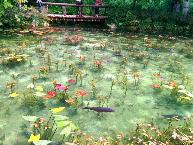 【まるで絵画】岐阜県のモネの池の神秘的な透明度がネットで話題に